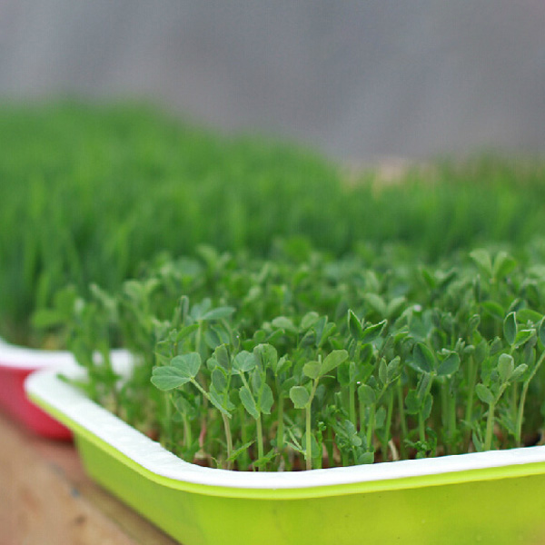 germinating pot seeds, Seeds Sprout Tray, Bean Sprout Seeds Tray, Double Layer Sprout Tray