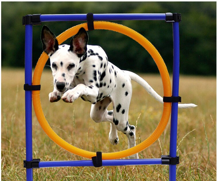 Dog Training Jump Hoop Pet Outdoor Games Training Agility Obedience Exercise Equipment