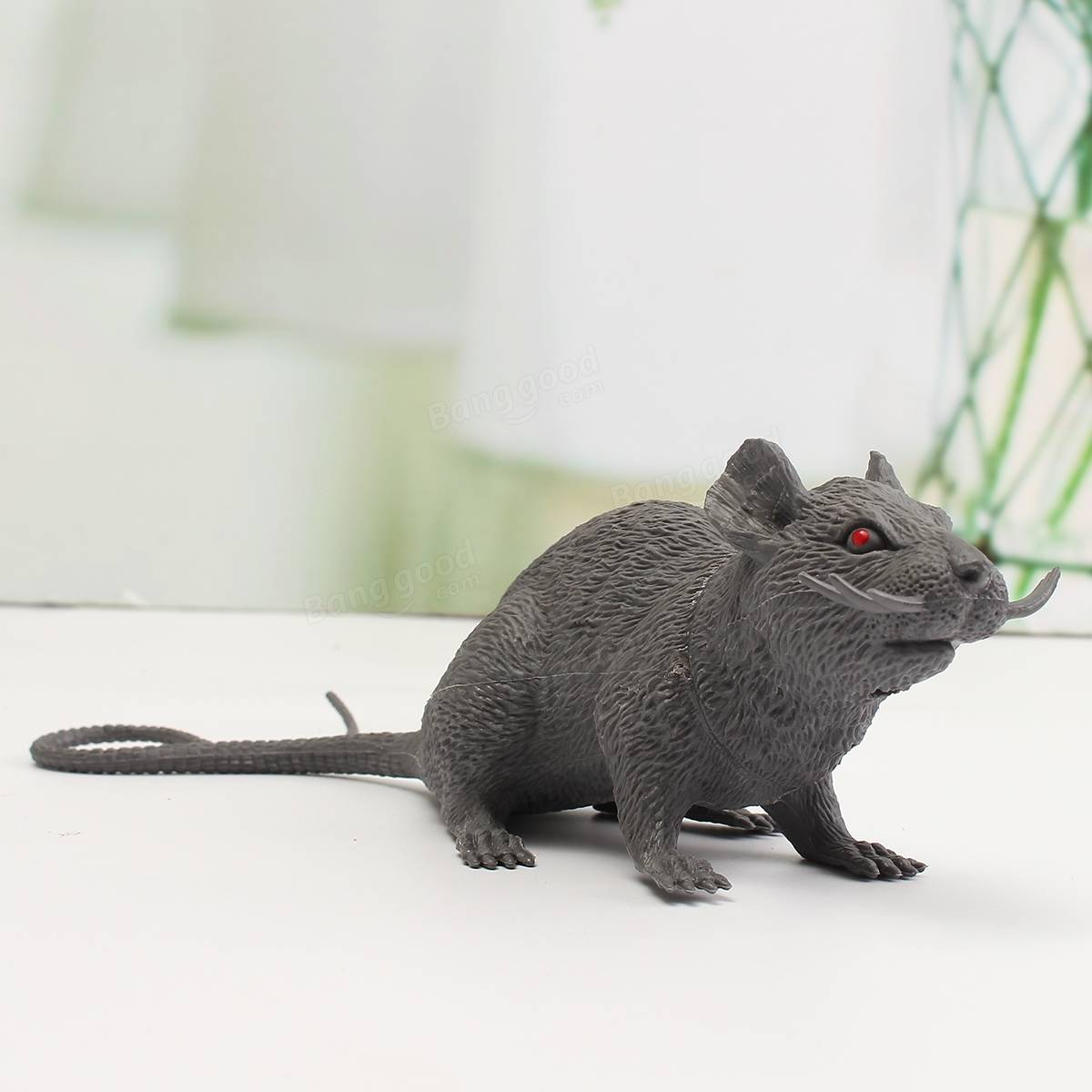 how to play with rats