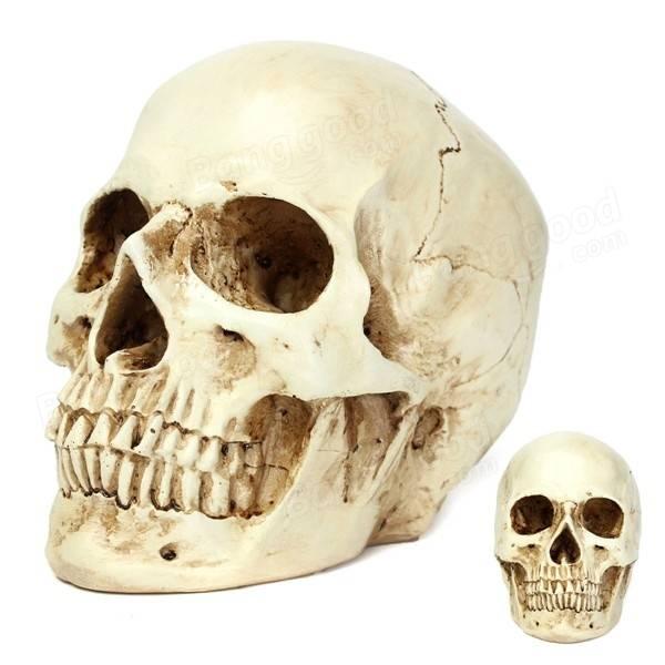 Resin skull Head