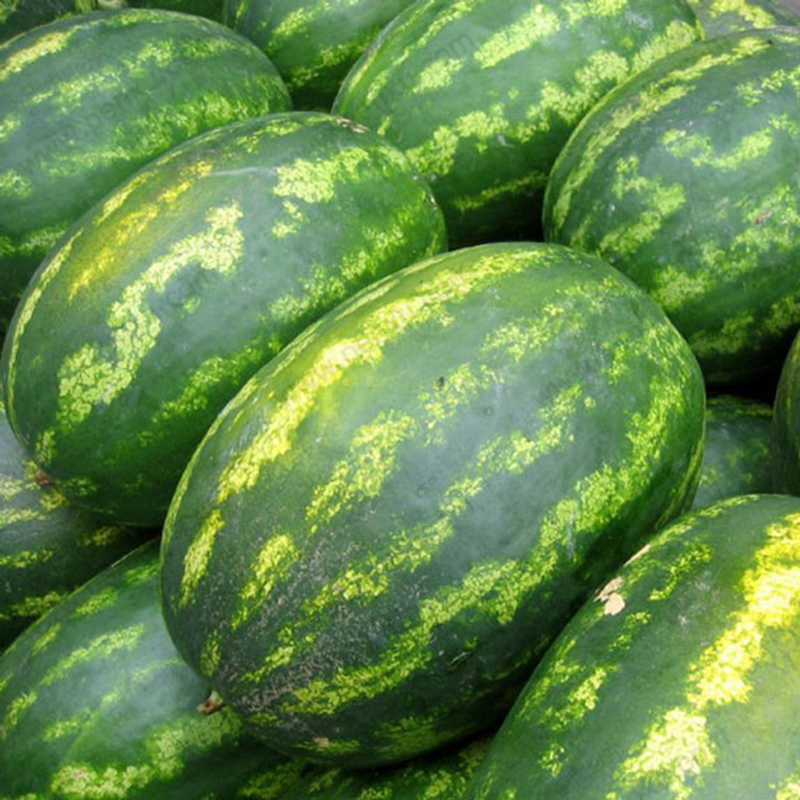 Egrow 30pcs Giant Watermelon Seeds Black Tyrant King Super