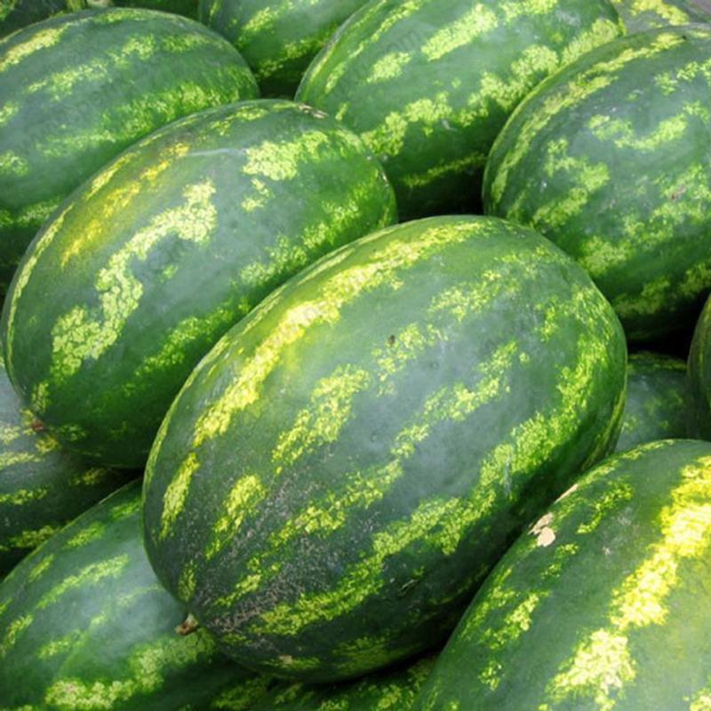 Egrow 30Pcs Giant Watermelon Seeds Black Tyrant King Super ...