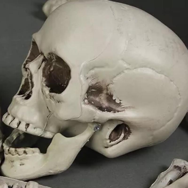 28PCS Adult Skeleton Bone Grave Skull Halloween Haunted House Decoration Props - Photo: 4