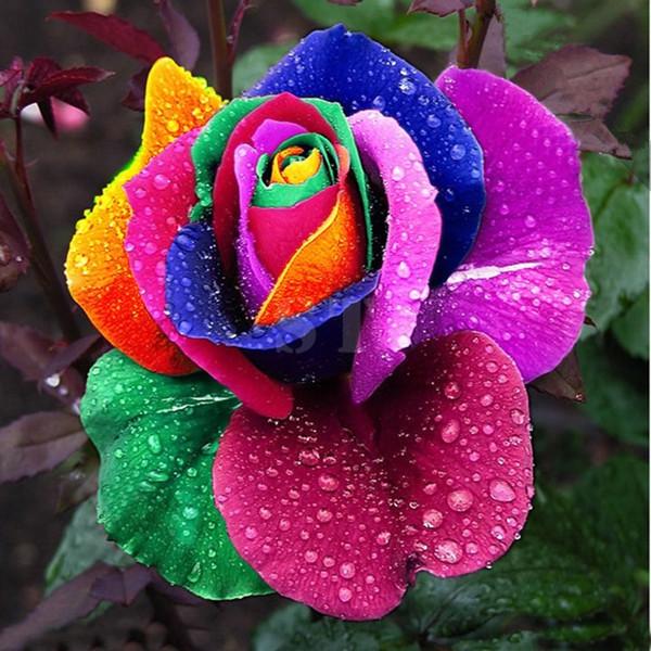 100Pcs Rainbow Rose Magic Garden Seed Colorful Rose Flower Home Garden Bonsai  Potted Ornamental Plants