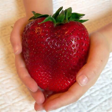 Egrow 100Pcs Giant Red Strawberry Seeds